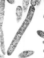 Deepbugs